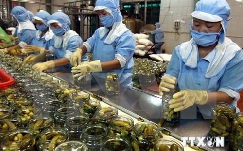 越南农产品远销180个市场 hinh anh 1