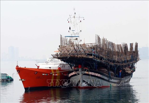 QNa 90129 TS号渔船海上遇险情 越南海上搜救力量及时出动52名船员全部获救 hinh anh 1