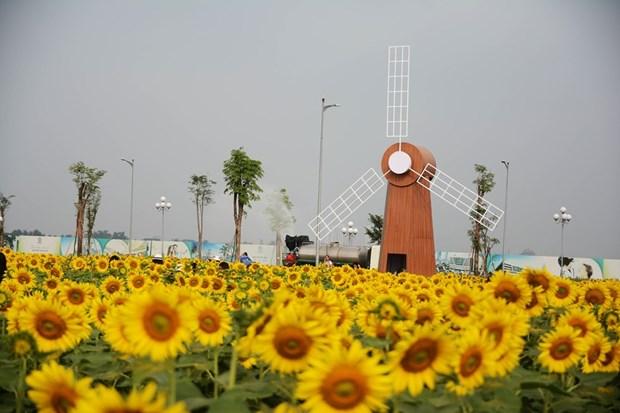 首德郡向日葵花田颇受西贡市民的青睐 hinh anh 2