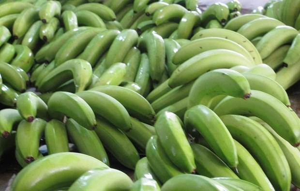 香蕉预计将成为老挝的主要出口农产品 hinh anh 1