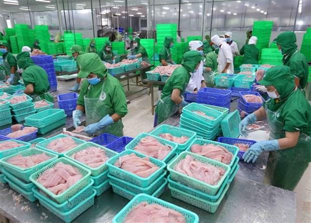 越南查鱼在进军国际市场的路上具有巨大优势 hinh anh 1