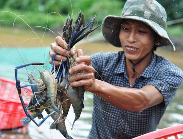 坚江省部分产品出口呈上升趋势 hinh anh 1