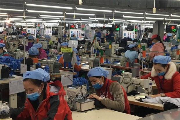 Vitas 与WWF合作推动越南纺织服装行业绿色发展 hinh anh 1