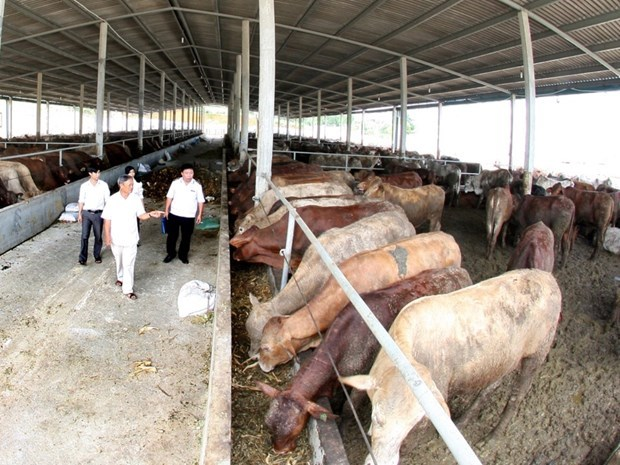 畜牧业急需变革转身 有效融入世界经济 hinh anh 1