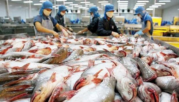 日本成为越南查鱼十大出口市场之一 hinh anh 1