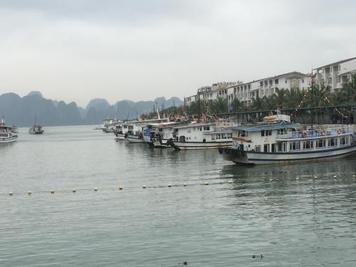 公交船 ——下龙湾的新颖旅游服务 hinh anh 1