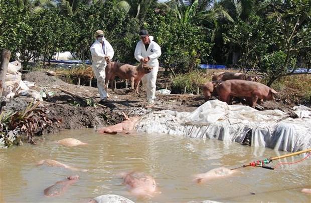 全国各地多措并举全力做好非洲猪瘟防控工作 hinh anh 2