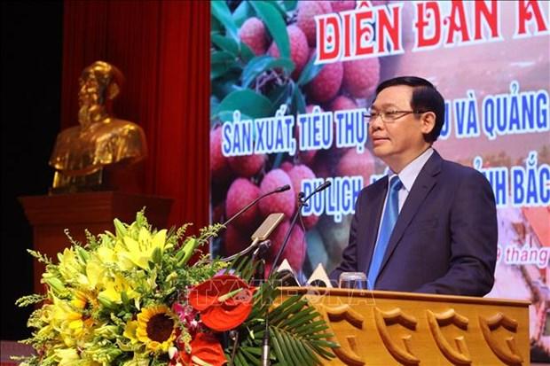 北江省举行荔枝生产和销售有关的经济论坛 hinh anh 1