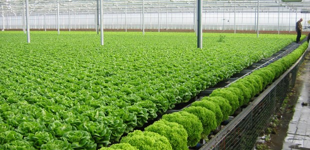 巴地头顿省大力吸引对高新技术农业的投入 hinh anh 2