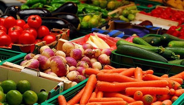 2019年初以来越南蔬果出口额达16亿美元 hinh anh 1