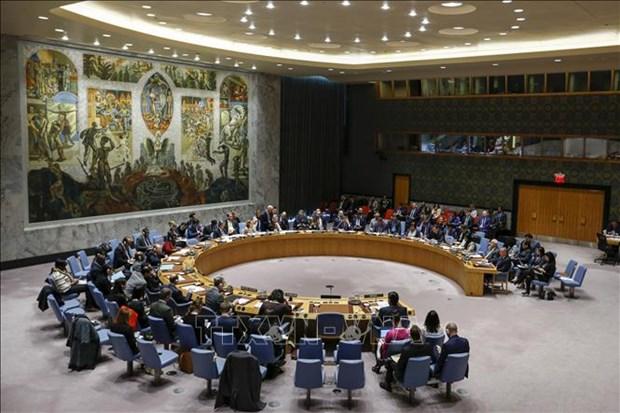 埃及专家:当选安理会成员国后,越南将在国际论坛上做出应有贡献 hinh anh 1