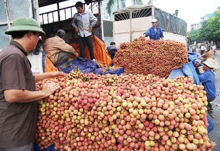 越南对中国出口1.1万多吨荔枝 hinh anh 2