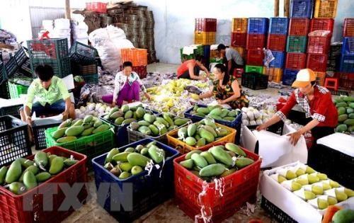 通过老街口岸的农产品出口量保持较好发展态势 hinh anh 1