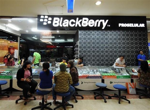 印尼将全力推动电子商务发展 hinh anh 1