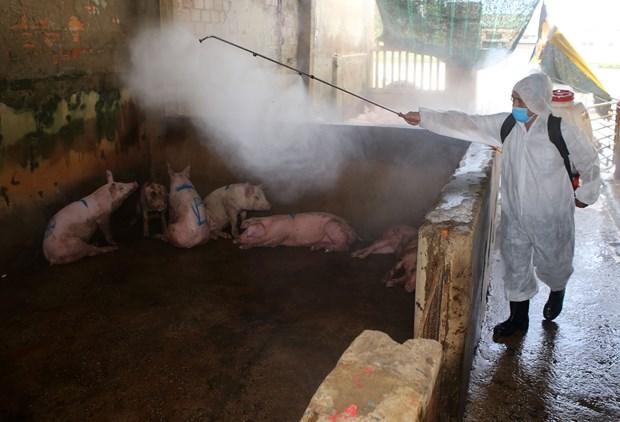 采取有力措施保障规模养猪场和种猪场生产安全 hinh anh 1