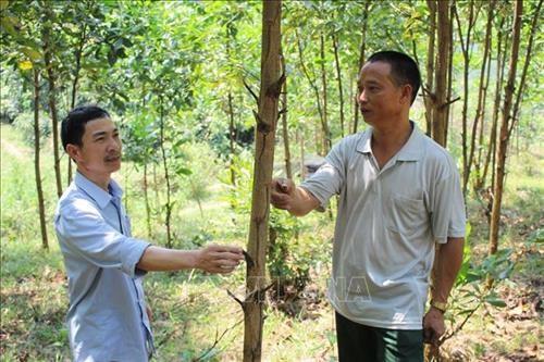 清化省协助农民发展林业经济 hinh anh 1