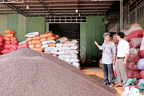 同奈省一家合作社的有机胡椒产品进军欧洲市场 hinh anh 2