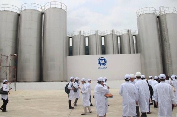 走在越南乳制品产业建设道路上的越南乳制品股份公司 hinh anh 2