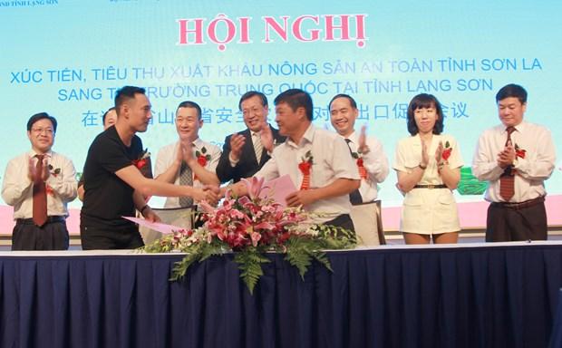 山萝省采取措施促进绿色农产品对中国市场出口 hinh anh 3