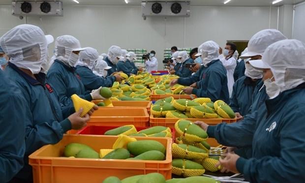 2019年前6月农业保持良好的增长势头 hinh anh 1