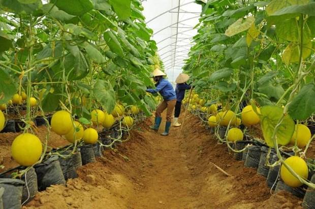 今年前6月胡志明市农业生产取得积极成果 hinh anh 1
