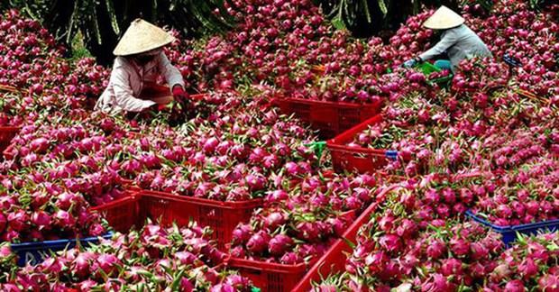 中国提高越南农产品技术壁垒 hinh anh 1
