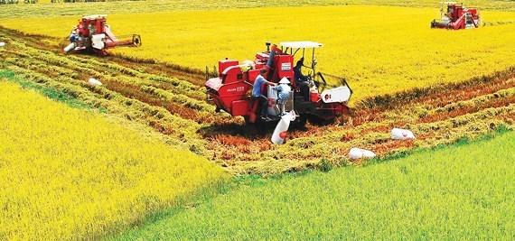 九龙江三角洲需加大农业结构重组工作 hinh anh 1