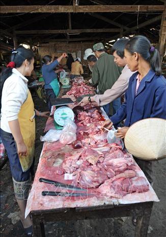 老挝首次发现非洲猪瘟疫情 hinh anh 1