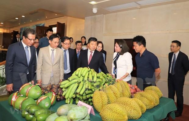促进越南各地与中国南部地区的合作 hinh anh 1