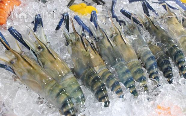 越南虾类产品敲开欧洲市场 hinh anh 1