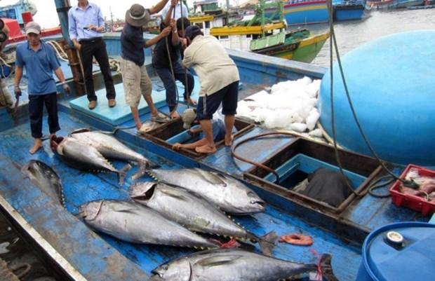 越南努力争取欧盟委员会取消对越南海产的黄牌警告和保障渔业可持续发展 hinh anh 1