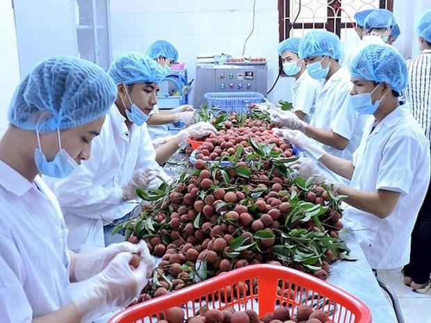 2019年前6个月越南蔬果出口额突破20亿美元 hinh anh 1