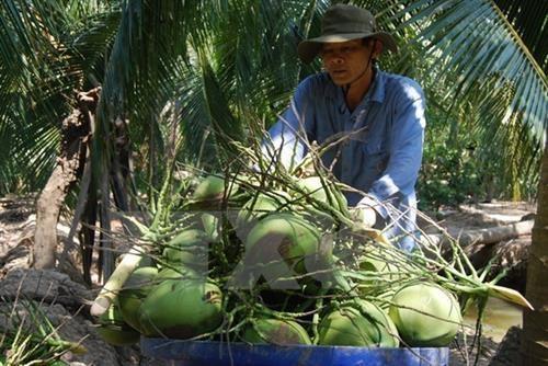 越南槟椥省主力产品出口情况大幅增长 hinh anh 1