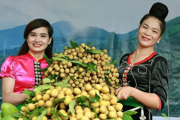山罗省已对12个国际市场出口10.6万多吨水果 hinh anh 2
