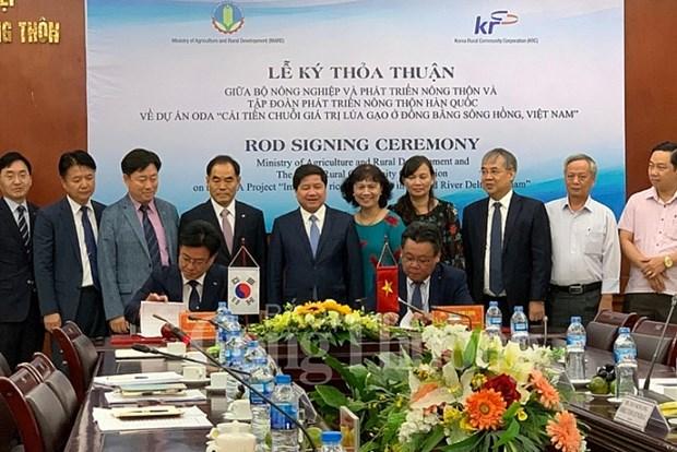 韩国助力越南改善稻米价值链 提高人民群众收入水平 hinh anh 1