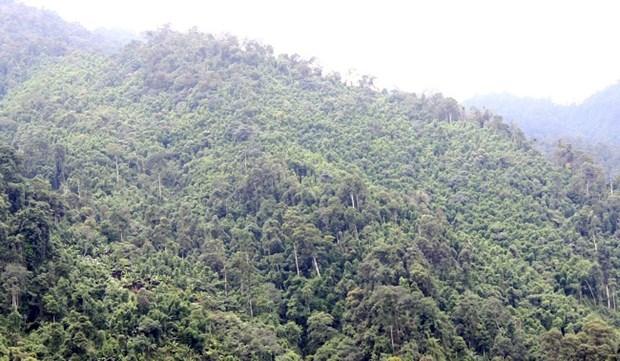 老街省林木覆盖率高于全国平均水平 hinh anh 1