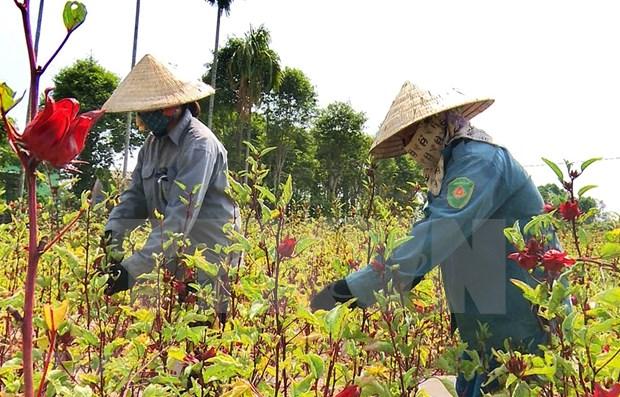 联合国可持续发展目标实施情况报告对外公布 越南上升三个位次 hinh anh 1