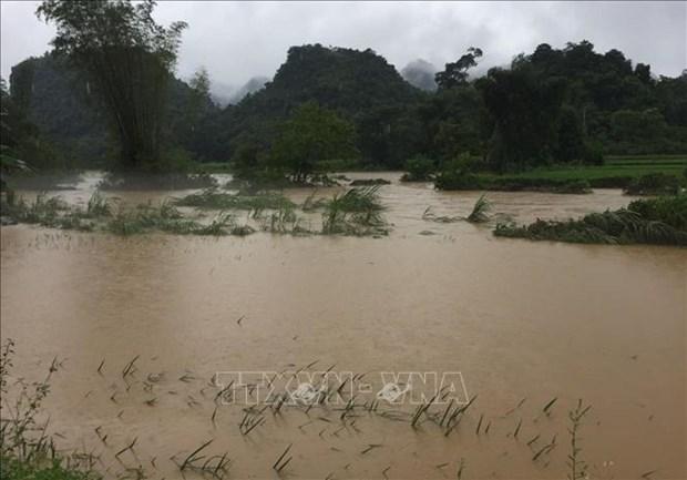 高平省出现强降雨 导致900多间房子被淹 部分水稻和农作物受损 hinh anh 1