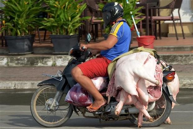 柬埔寨非洲猪瘟疫情扩大蔓延 hinh anh 1