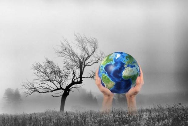 加强国际合作有效落实应对气候变化计划 hinh anh 1