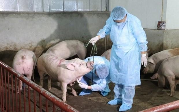 越南西宁省与柬埔寨柴桢省配合预防非洲猪瘟疫情 hinh anh 1