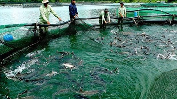 林同省注重发展冷水鱼产业 力争实现2022年冷水鱼产量达2万吨 hinh anh 1