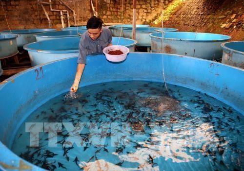 林同省注重发展冷水鱼产业 力争实现2022年冷水鱼产量达2万吨 hinh anh 2