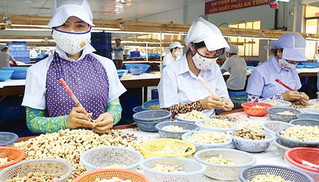 越南对中国出口的腰果出口猛增 hinh anh 2