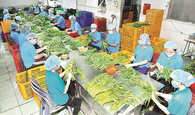 越南农产品抓住EVFTA带来的机遇 hinh anh 2