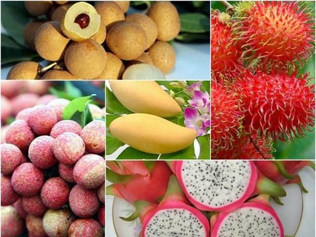 2019年前7月越南蔬果出口额达23.1亿美元 hinh anh 1