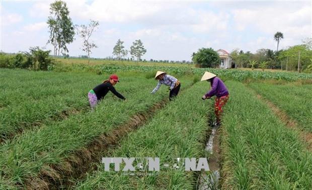 越南中部超过6.5万公顷农作物面临旱灾和缺水危机 hinh anh 2