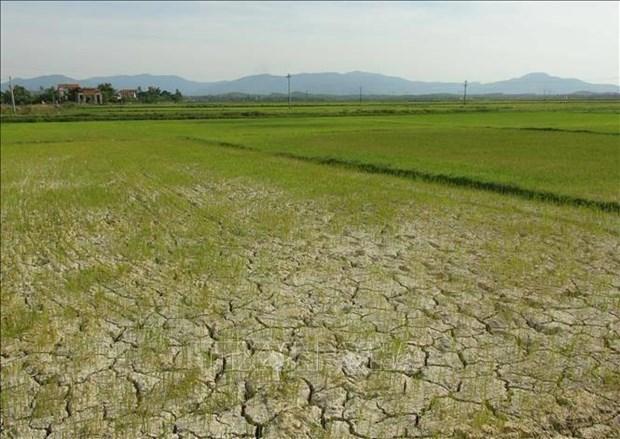 越南中部超过6.5万公顷农作物面临旱灾和缺水危机 hinh anh 1