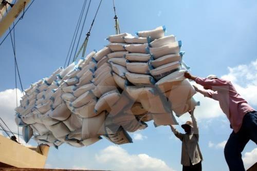 越南前7月大米出口量超过400万吨 hinh anh 2
