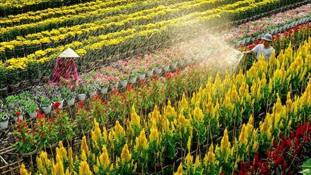 越南同塔省推动旅游与农业价值结合发展 hinh anh 2